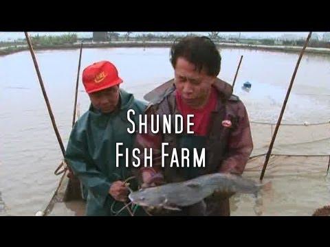 Martin Yan's China: Shunde Fish Farm