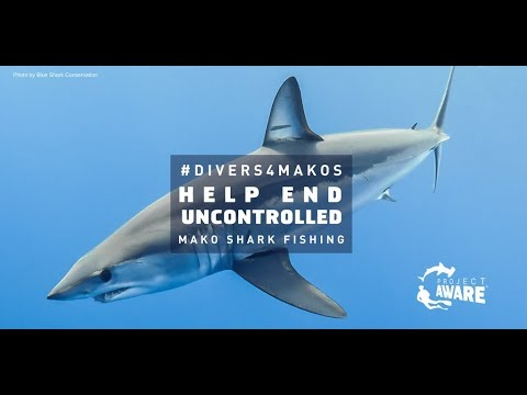 #Divers4Makos Urge ICCAT Parties To Safeguard The Atlantic Shortfin Mako From Overfishing