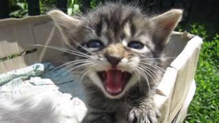 Чудные Котята.Кошка и три котёнка.Видео стоит посмотреть !!!Веселые котята