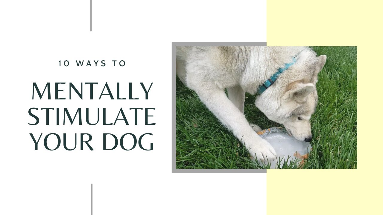 10 Ways to Mentally Stimulate your Dog
