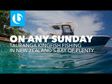 On Any Sunday - Tauranga Kingfish Fishing New Zealand