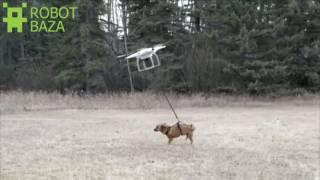 Можно выгуливать собаку с помощью дрона