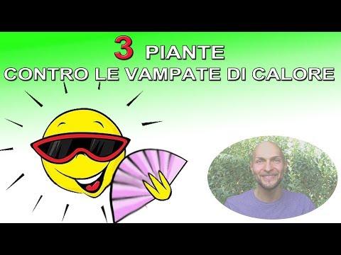 3-piante-per-contrastare-le-vampate-di-calore