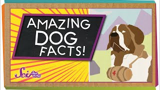 3 Amazing Facts About Dogs!
