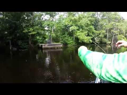 Fly Fishing Bayou Lacombe Louisiana