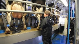 Dairymaster Swiftflo Revolver Rotary Parlour - Graham Hanmer Farm UK