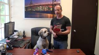 Kong Wubba Dog Fetch & Tug Toy - The Ultimate Interactive Dog Toy