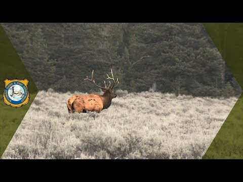 Hunting Applications Increase In Wyoming