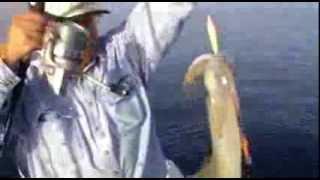 Squid Fishing in Greece - Ψάρεμα καλαμαριών