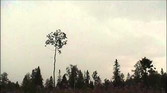 Ukkonen 2003 Polvijärvellä Pohjoiskarjalassa