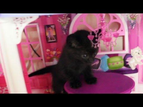 Cute Kitten Plays in Doll House