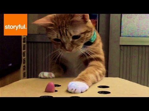 Cat Plays Whack-A-Finger
