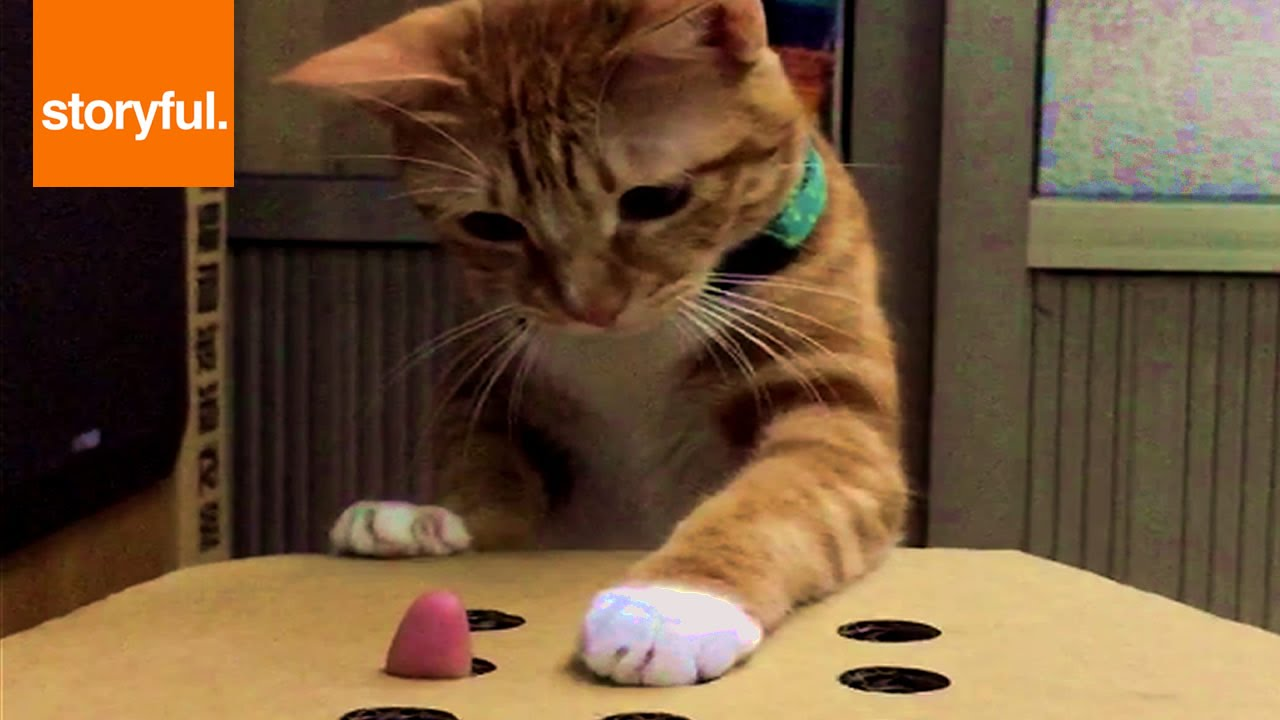 Cat Plays Whack A Finger YouTube