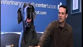 Giant George - größter Hund der Welt