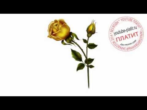 Нарисованные цветы и красивые картинки букетов