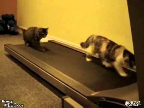 Những trò funny của mèo