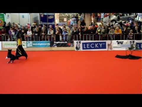 1. Platz beim Int. Dogdance-Turnier in WInterthur 2011 - Klasse 1 - Gruppe 1 - Anja Jakob und Merlin