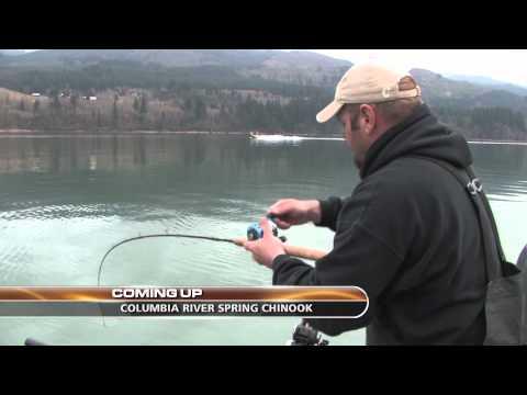Merwin Kokanee & Columbia River Springers