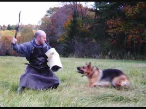 german shepherd attack - YouTube