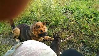 Борьба собаки против кота