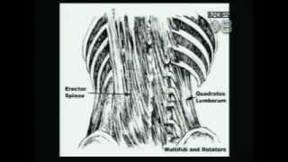 Abdominal & Core Strength Exercises for Back Pain | Back Doctor Denver CO | Vail TV8