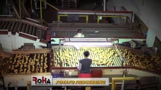 Roha Premium Potato Ltd - Potato Processing (Selecting, Sorting, Packing and Storing)