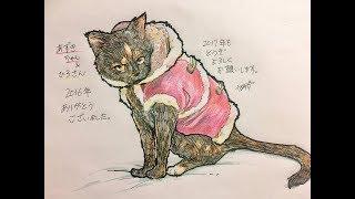 旅行 旅 日本縦断 猫 自然.