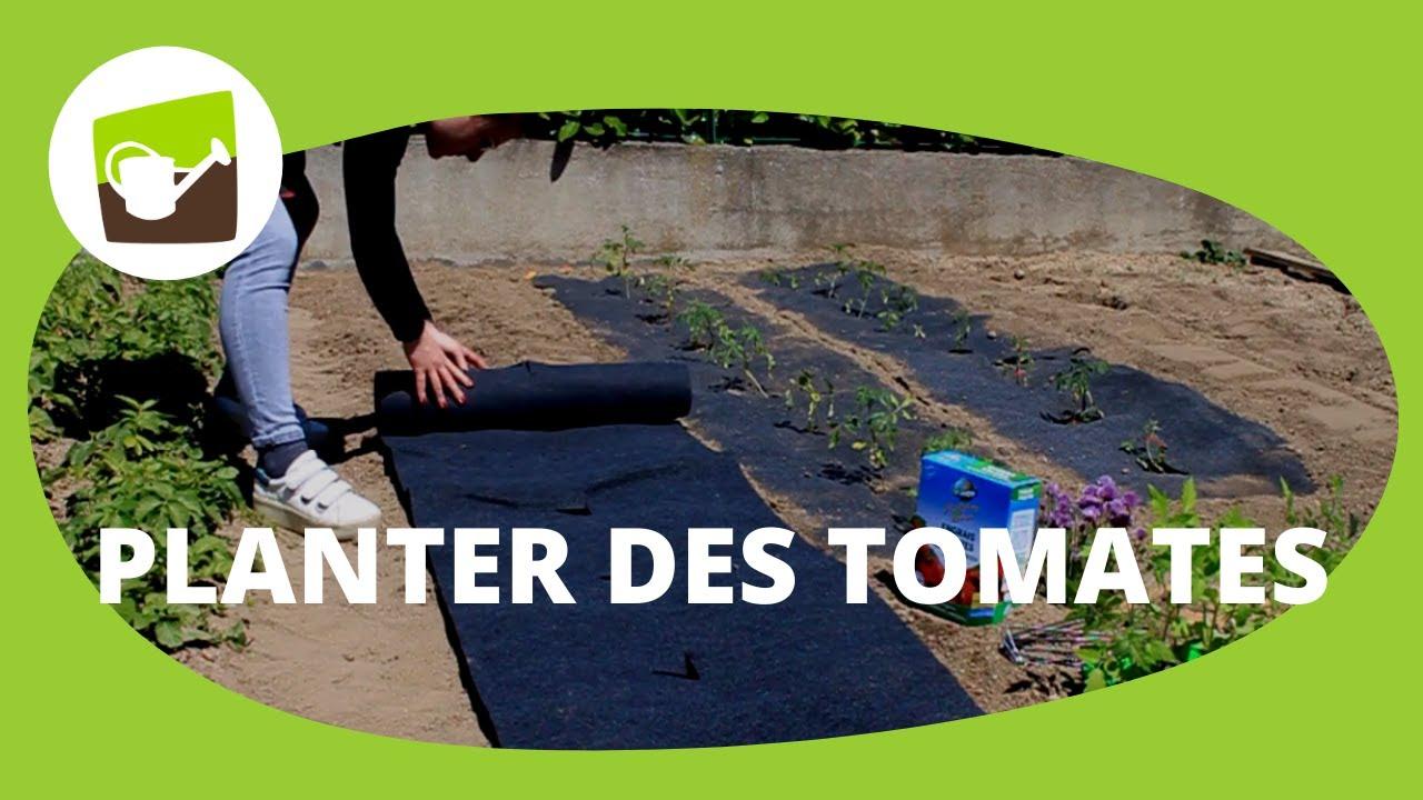 Comment planter des tomates en pleine terre ? - YouTube