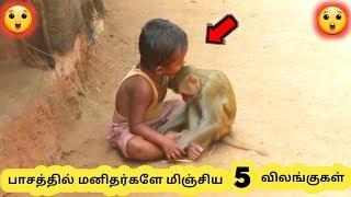 விலங்குகளின் பாசம் || Five Animal Love Stories || Tamil Galatta News