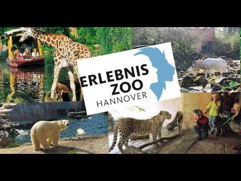 Erlebnis Zoo Hannover ,, Chinesicher Leopard , Eisbär , Sambesia Bootsfahrt , Tiger  und mehr ,, #1