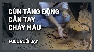 Chó cắn tay - tăng động - Full bài dạy 1 buổi | BossDog