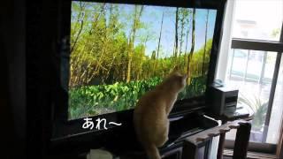 「さわやか自然百景」NHK日曜部の番組が大好きなチャコです.