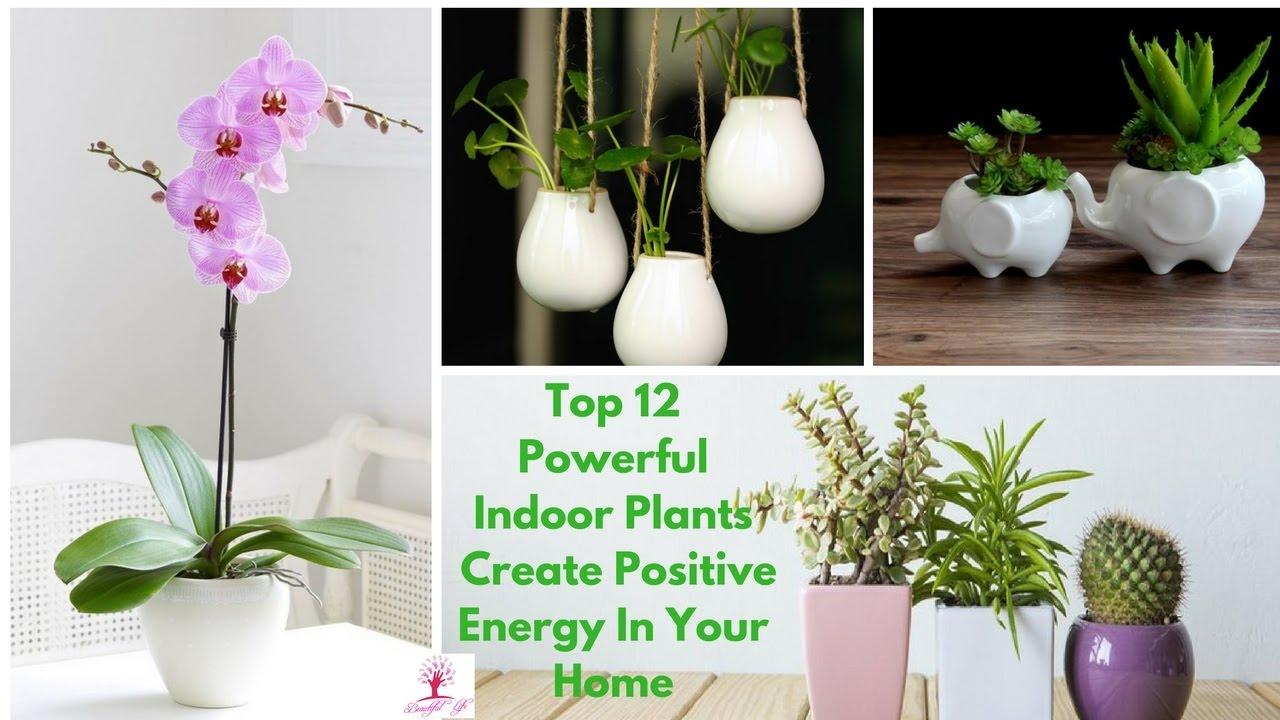 Top 12 Powerful Indoor Plants Create Positive Energy In