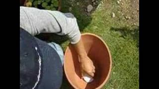 植木鉢で睡蓮やメダカはどうじゃ!?