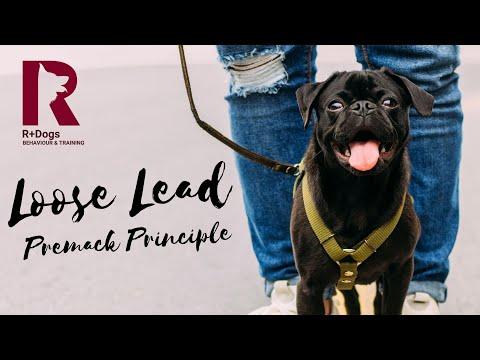 Billy: Loose Lead (Premack)