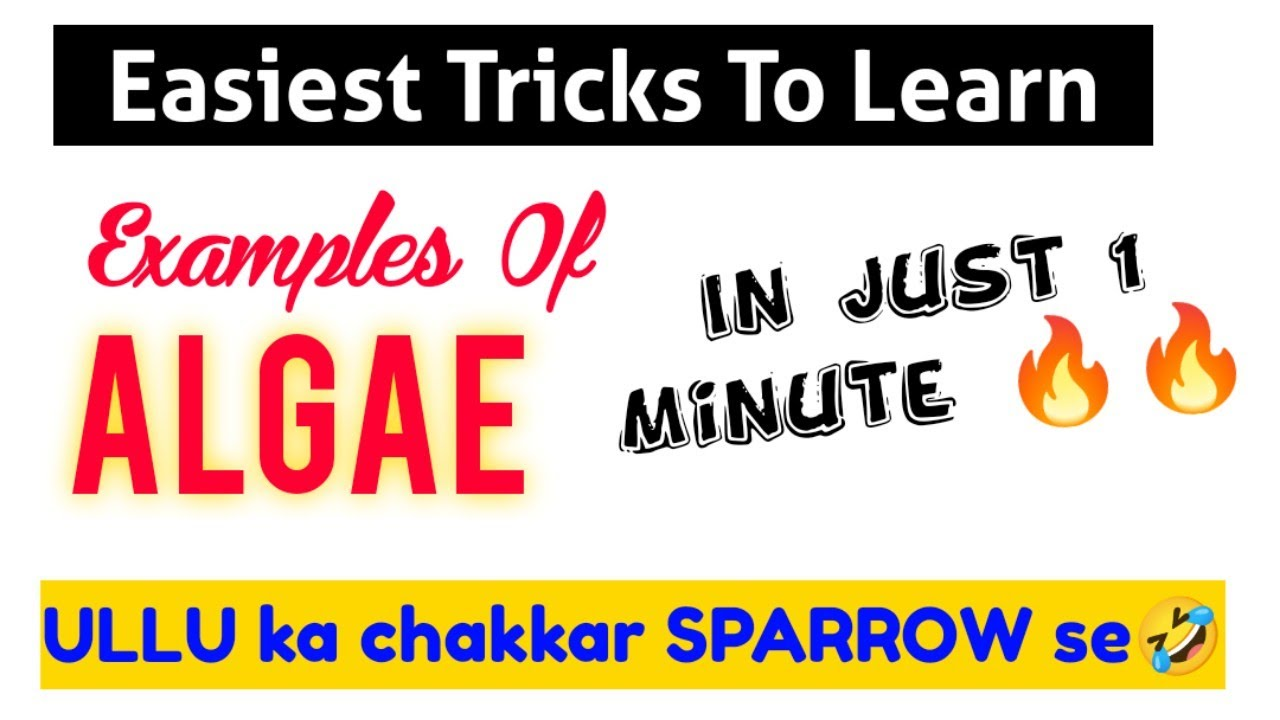TRICK: Learn Examples Of ALGAE In Just 1 Minute 🔥🔥| Neet 2022 & Neet 2023