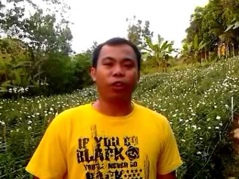 maomawan farming culmination (spfy 2012-2013)