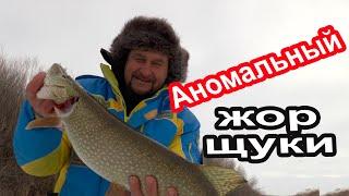 БОЛЬШАЯ ЩУКА на ЖИВЦА Зимняя рыбалка на дедовские ЖЕРЛИЦЫ Щука каннибал