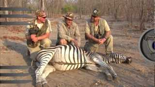 AWESOME ZEBRA KILL SHOT TO THE HEAD