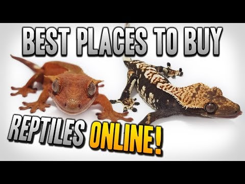Best Places To Buy Reptiles Online! 2020