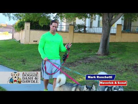 Animal Humane Doggie Dash & Dawdle
