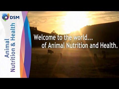 DSM Animal Nutrition & Health - Leading Supplier Of Vitamins, Carotenoids, Eubiotics & Feed Enzymes