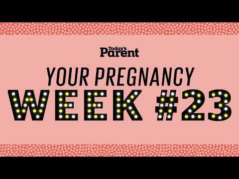 Your pregnancy: 23 weeks
