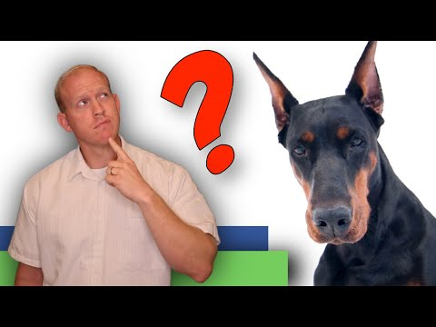 15 Most Common Doberman Questions Asked by New Owners