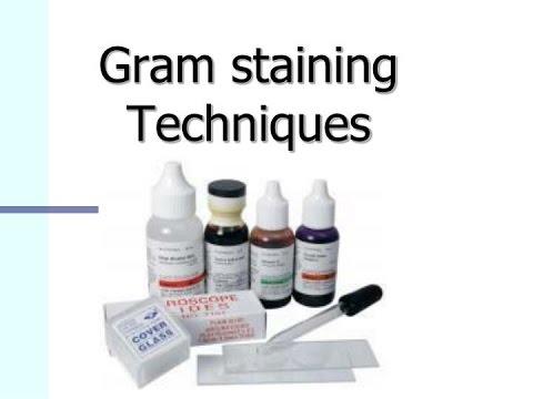 Gram Staining Procedure for Bacteria