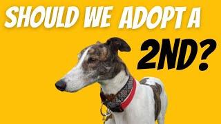 Should we get a 2nd greyhound?