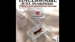 Обзор журнала насекомые и их знакомые Медведка 11 выпуск
