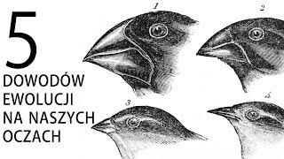 5 dowodów ewolucji na naszych oczach