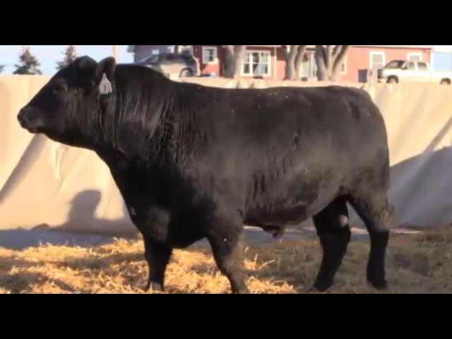 Marcy Cattle Company Lot 7