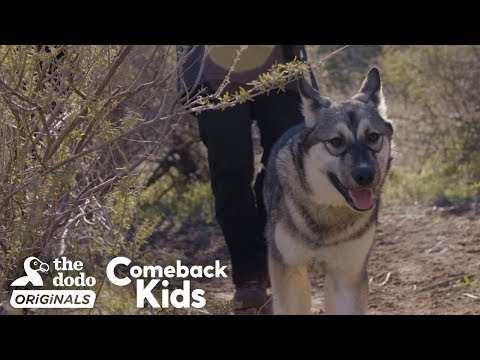 Baby Wolf Dog Bounces Back After Rough Start | The Dodo Comeback Kids  | The Dodo Comeback Kids